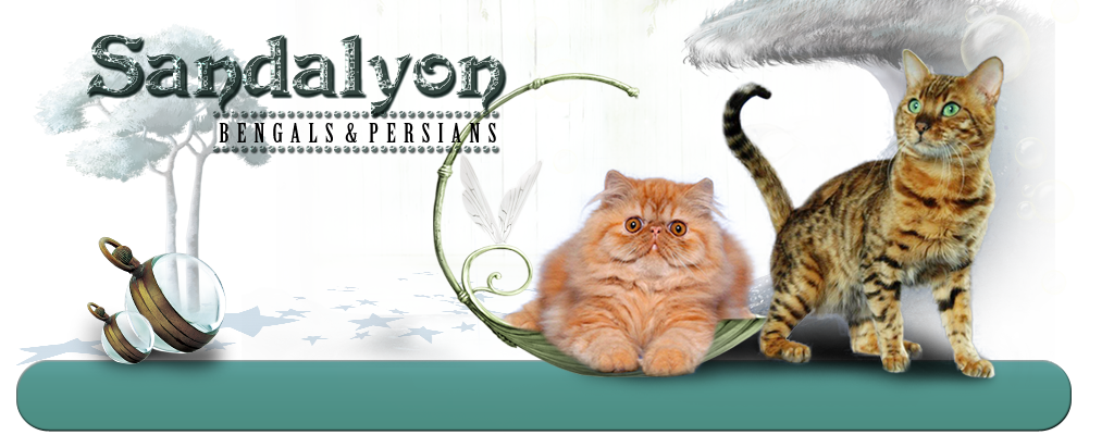 Sandalyon Cattery